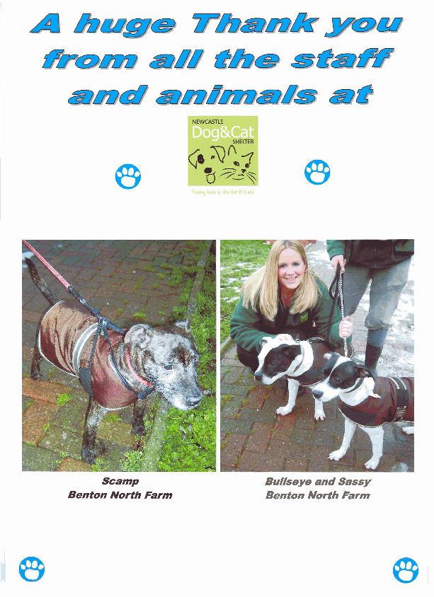 robinson s pet store newcastle dog amp cat shelter